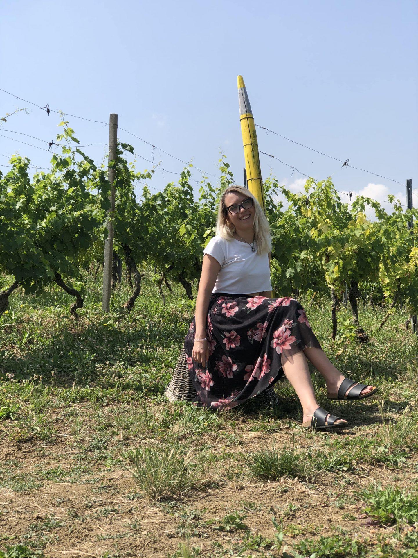Le viti della Vigna dei Pastelli a Coazzolo