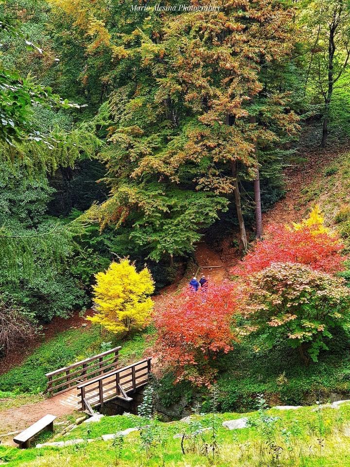 dove vedere il foliage in piemonte nel viale del parco della burcina
