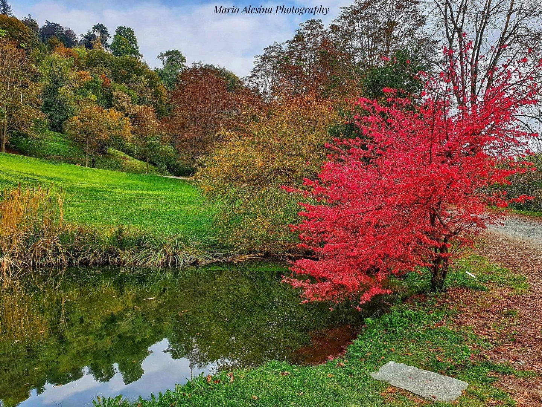foliage nel parco della burcina